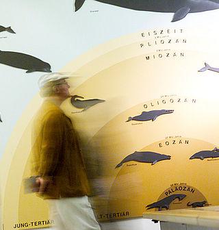 Museum für Natur und Umwelt